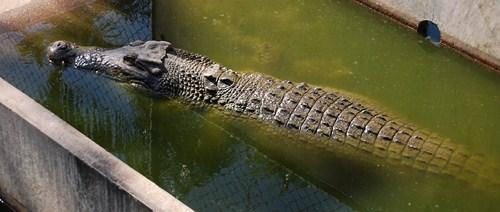 animaux dangereux australie 5 Les animaux les plus dangereux dAustralie
