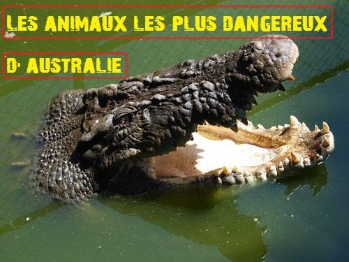 featured animaux dangereux1 Les animaux les plus dangereux dAustralie