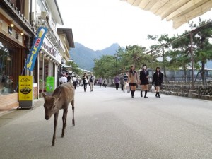 photo miyajima japon
