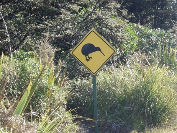 Kiwi nouvelle-zélande photo panneau