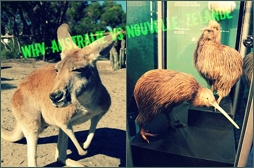 PicMonkey Collage Où partir en Working Holiday Visa? Australie VS Nouvelle Zélande, le comparatif