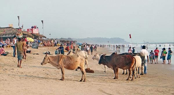 Quoi visiter en Inde du Sud