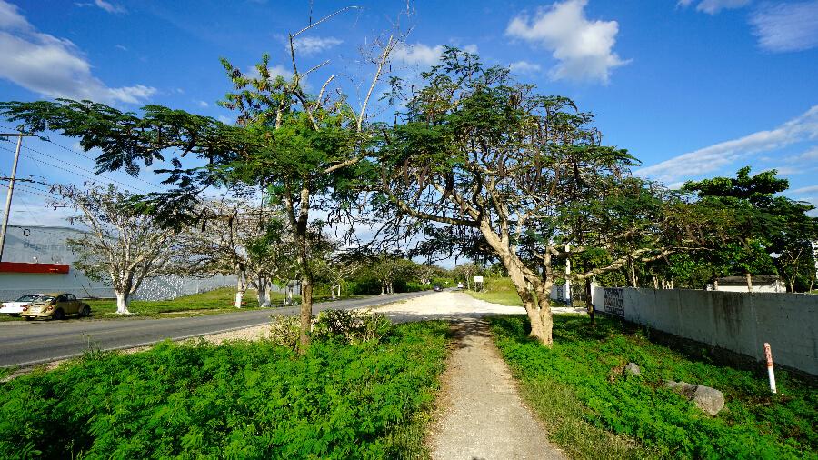 valladolid mexique cenote (15)