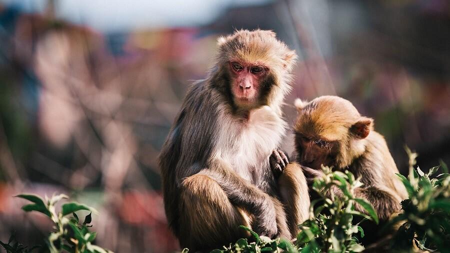 quoi voir au nepal