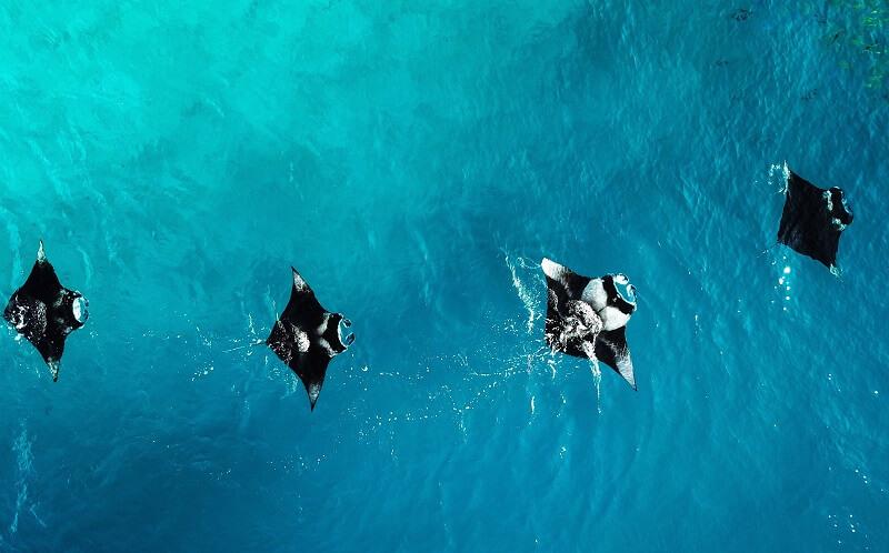 quoi faire aux maldives